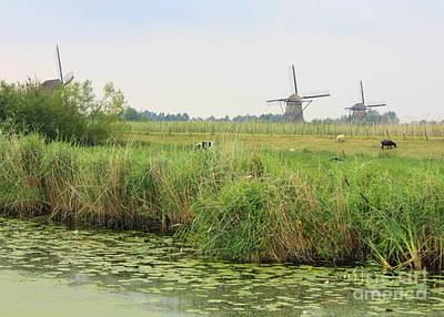 Dutch Landscape With Windmills And Cows Poster by Carol Groenen