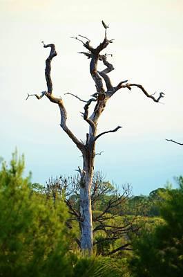 Eagle Tree Poster by Lynda Dawson-Youngclaus
