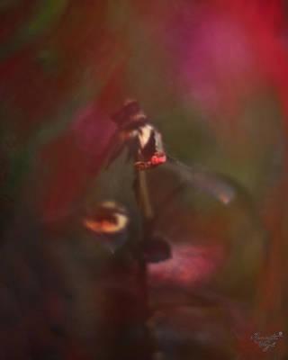 .faded Poster by Renata Vogl