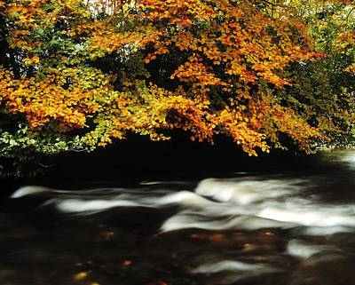 Fast Flowing Water And Fall Colours Poster by The Irish Image Collection