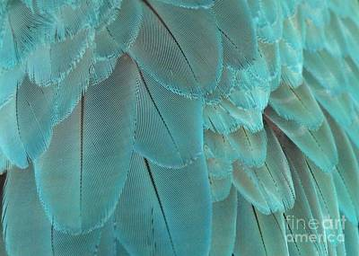 Feathery Turquoise Poster by Sabrina L Ryan