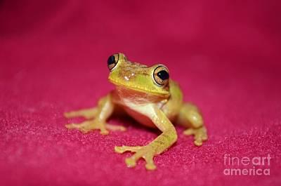 Feelin Froggy Poster by Lynda Dawson-Youngclaus