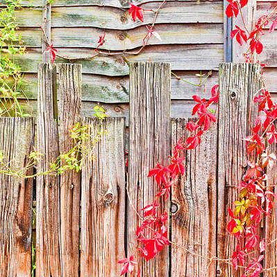 Fence Background Poster by Tom Gowanlock