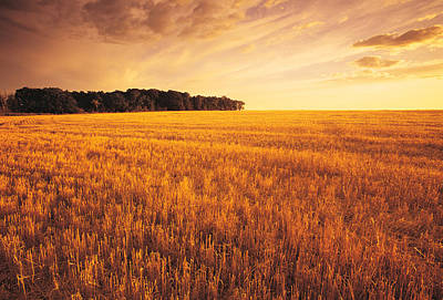 Field Of Grain Stubble Near St Poster by Dave Reede