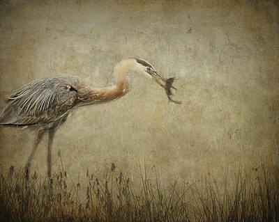 Fishin' Poster by Mario Celzner