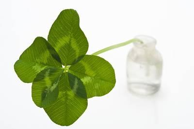 Five-leaf Clover Poster by David Nunuk