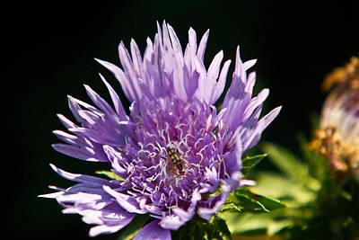 Flowered Beetle Poster by Douglas Barnett