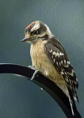 Flowing Downy Woodpecker Poster by Bill Tiepelman