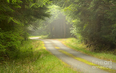 Forest Portal Poster by Idaho Scenic Images Linda Lantzy