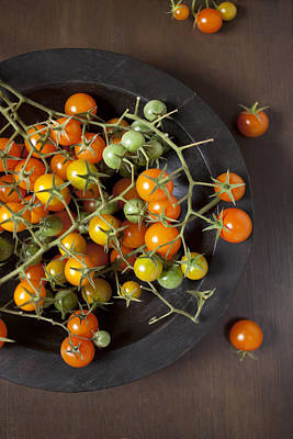 Freshly Picked Sungold Tomatoes Poster by Lara Hata