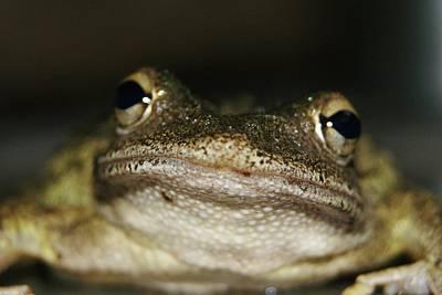 Frog Lips  Poster by Lynda Dawson-Youngclaus