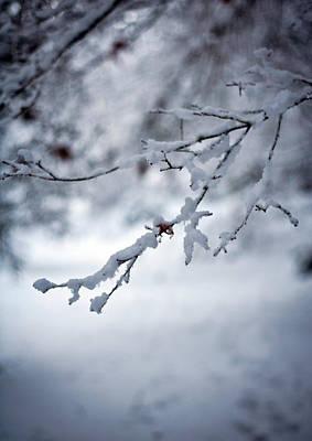 Frozen Path Poster by Mike Reid