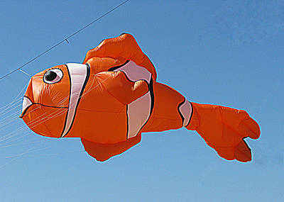 Giant Clownfish Kite  Poster by Samuel Sheats