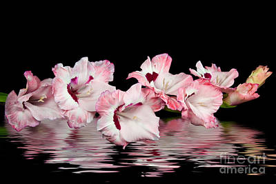 Gladiola Reflection Poster by Maria Dryfhout