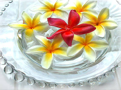 Glass Bowl Of Plumeria Poster by Elaine Plesser