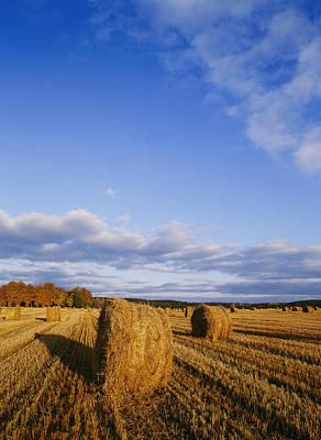 Golden Rolls Of Hay In A Field Poster by Mattias Klum