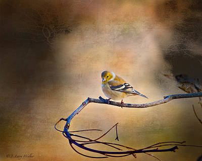 Goldfinch In Deep Thought Poster by J Larry Walker