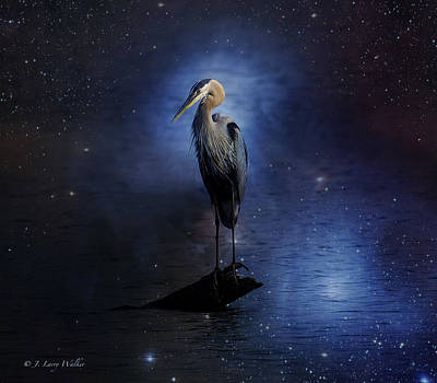 Great Blue Heron On A Starry Night Poster by J Larry Walker