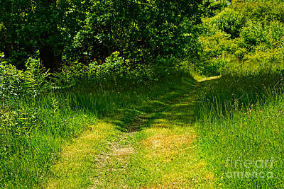Green Path Poster by Lutz Baar