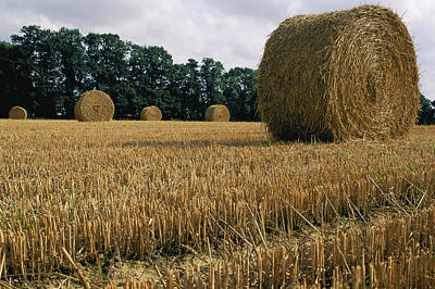 Haystacks In A Field In Normandy Poster by Nicole Duplaix
