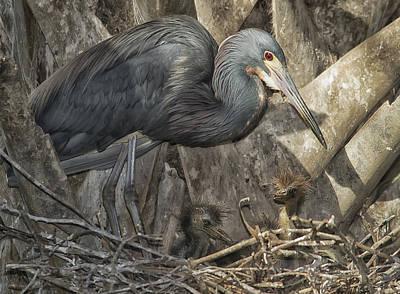 Heron's Nest Poster by Wade Aiken