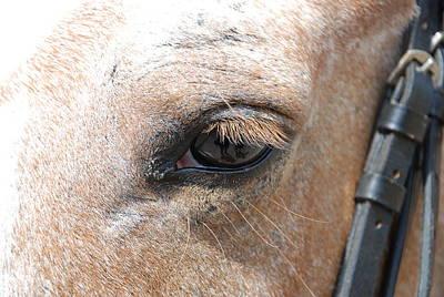 Horse Eye Poster by Jennifer Ancker
