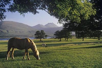 Horse Grazing On A Landscape Poster by The Irish Image Collection