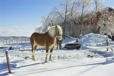 Horse On Maine Farm After Snow And Ice Storm Photograph Poster by Keith Webber Jr