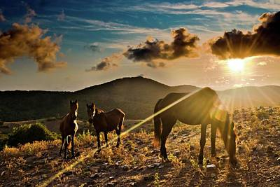 Horses Grazing At Sunset Poster by Finasteride