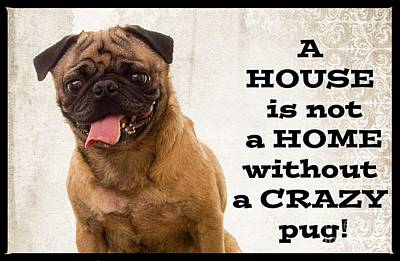 House Is Not A Home Without A Crazy Pug Poster by Edward Fielding