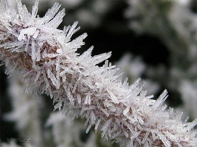 Ice Crystal Formation Along A Twig Poster by J McCombie