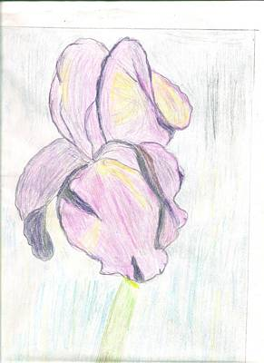Iris Sketch Poster by Carolyn Donnell