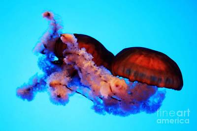 Jellyfish Drama - Digital Art Poster by Carol Groenen