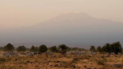 Kilimanjaro Dusk Poster by Joe Bonita