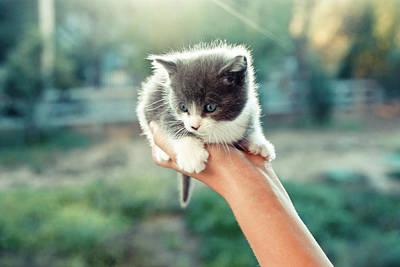 Kitten In Hand, 2010 Poster by Emily Golitzin