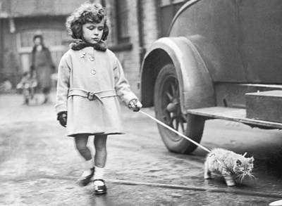 Kitten On Lead Poster by Fox Photos