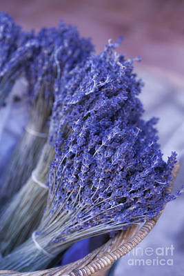 Lavender Bunches In Provence Poster by Paul Grand