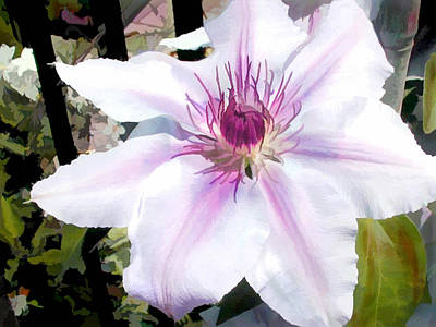 Lavender Clematis Poster by Elaine Plesser
