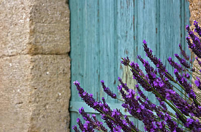 Lavender Plant Poster by Barbara Piancastelli