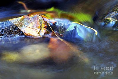Leaves On Rock In Stream Poster by Sharon Talson