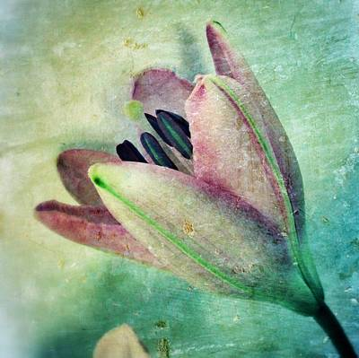 Lily In My Dreams Poster by Marianna Mills
