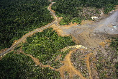 Logging Erosion In Lowland Tropical Poster by Gerry Ellis