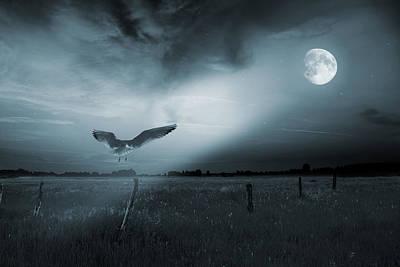 Lonely Bird In Moonlight  Poster by Jaroslaw Grudzinski