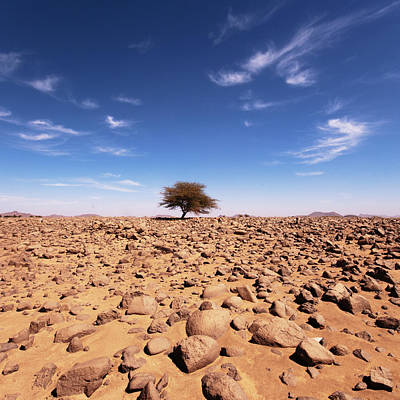 Lonely Tree At Sahara Desert Poster by Taghit