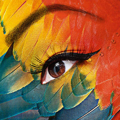 Macaw Poster by Yosi Cupano