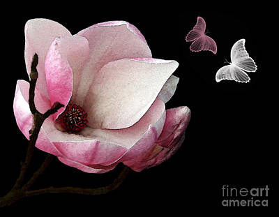 Magnolia With Butterflies Poster by Kaye Menner