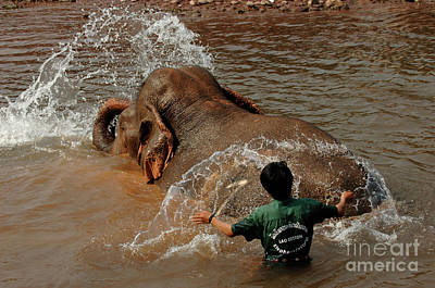 Bathing An Elephant Laos Poster by Bob Christopher