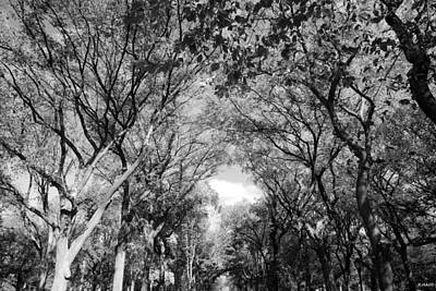 Mall Of Trees In Black And White Poster by Rob Hans