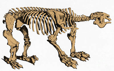 Megatherium, Extinct Ground Sloth Poster by Science Source