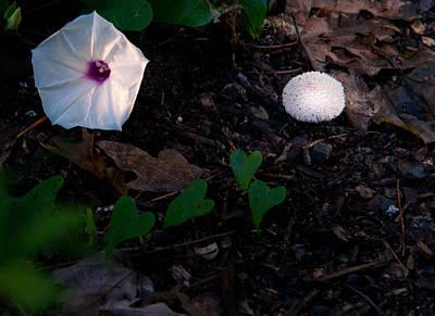 Morning Glory And Mushroom Poster by Douglas Barnett